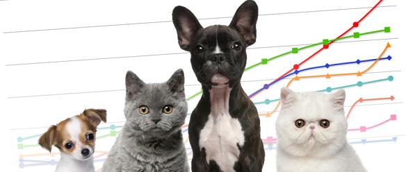 いま大人気の小型犬、掛金で選ぶならこの保険 – ペット保険を徹底比較 vol. 5