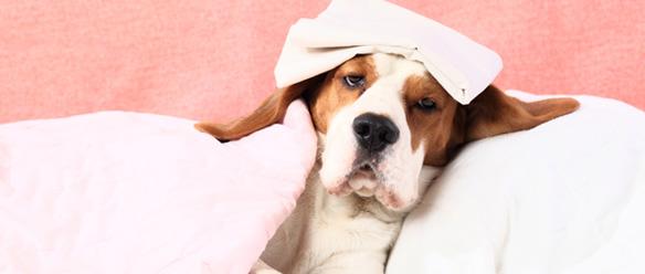 ふつうは補償対象外、でもこのペット保険会社なら補償する! – ペット保険を徹底比較 vol. 4